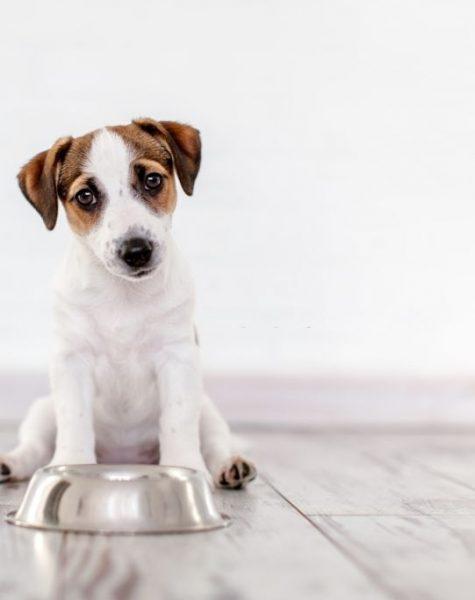 Dog, Eating,